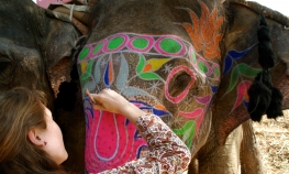 Jaipur - Private tour to Amber fort with Elephant Ride.